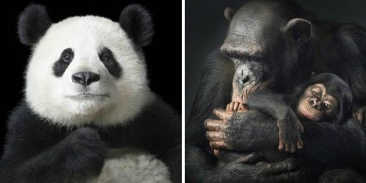 MORE-THAN-HUMAN-_-Tim-Flach-630x316